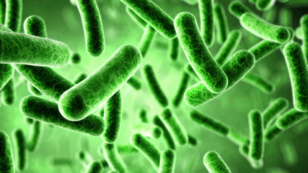 Probiotics While On Antibiotics